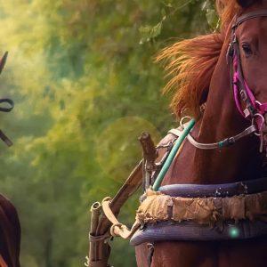 Cavalli al trotto