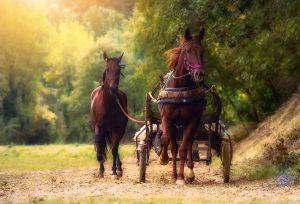 cavalli-calesse_resize